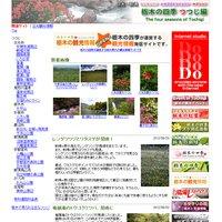 栃木の四季「つつじ編」